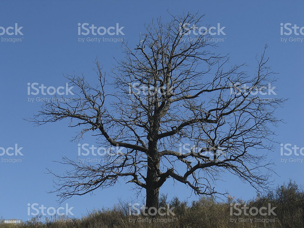 Albero senza foglie foto stock royalty-free