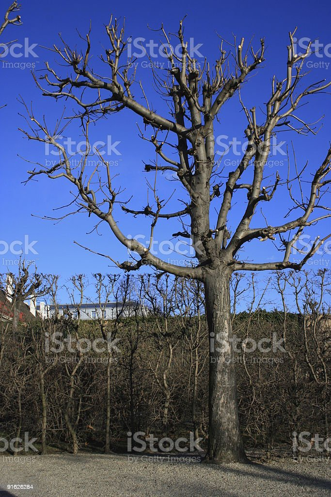 Tree without leaves stock photo