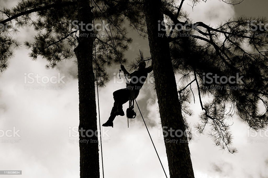 Tree Worker stock photo