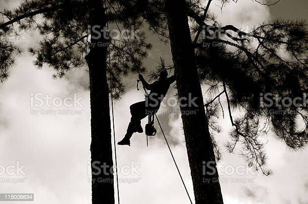 Photo of Tree Worker