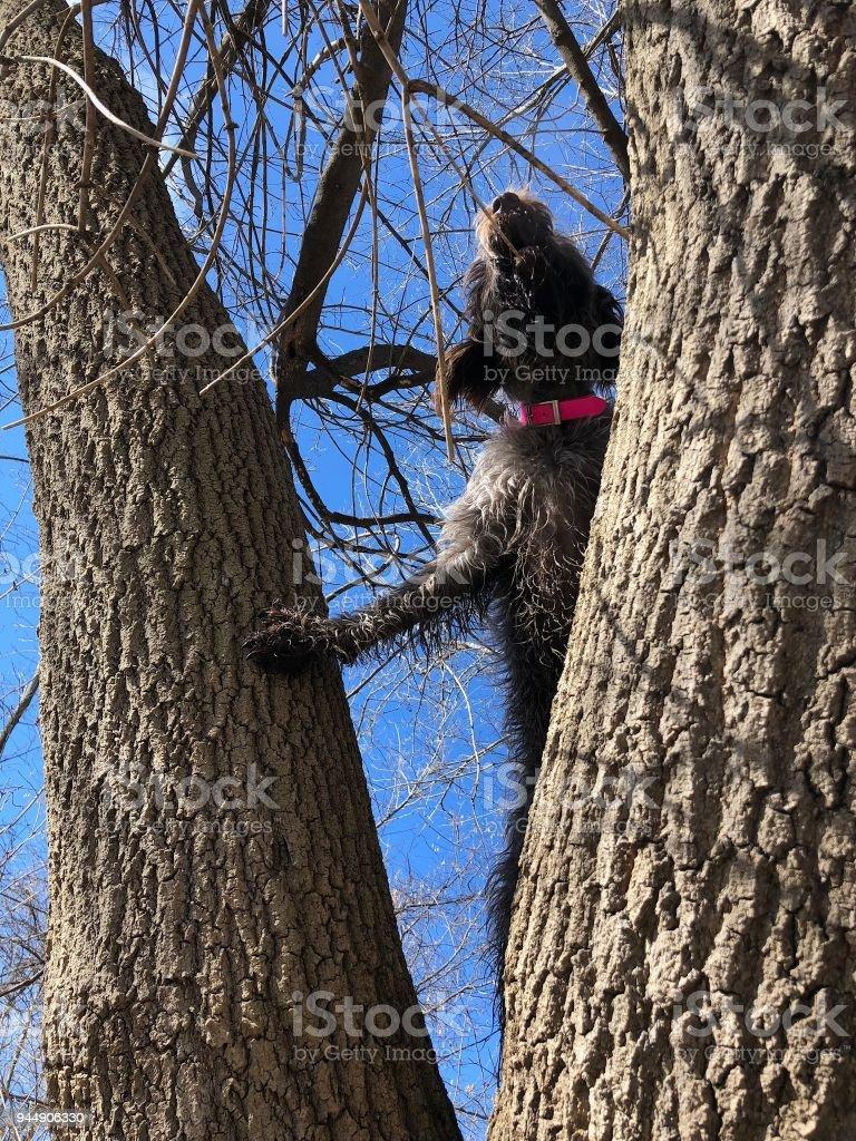 Tree yoga dog stock photo