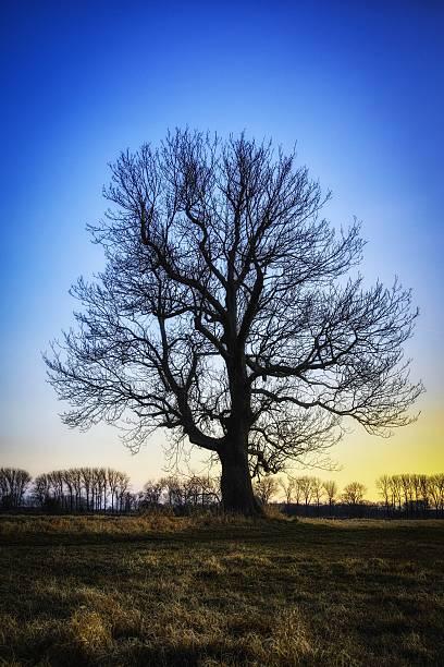 Tree2 stock photo