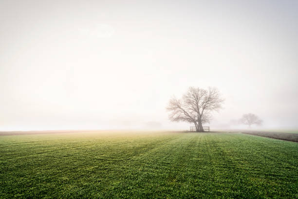 Tree_blanketed_by_heavy_morning_fog stock photo