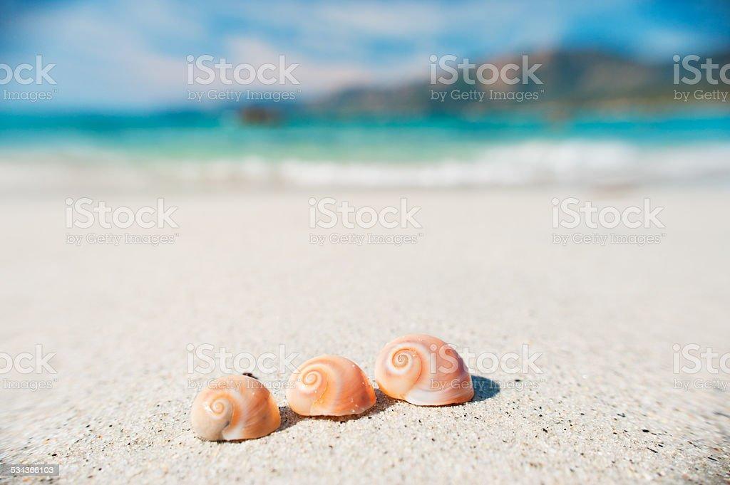 Treee conchas na praia na frente do mar - foto de acervo