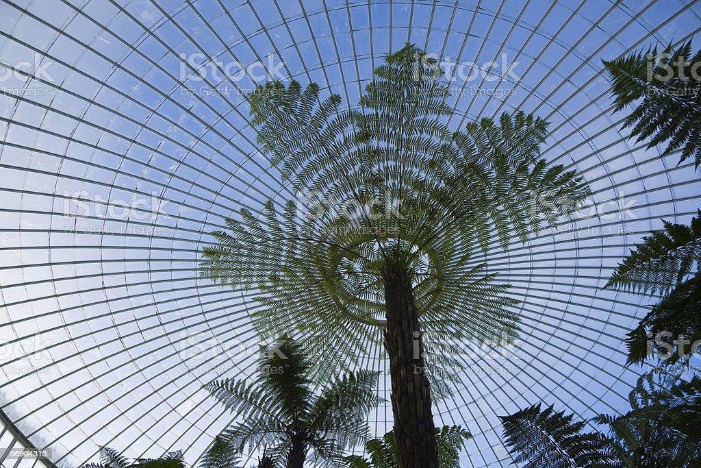 treefern dome royalty-free stock photo