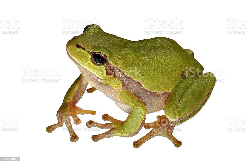 Tree-frog stock photo