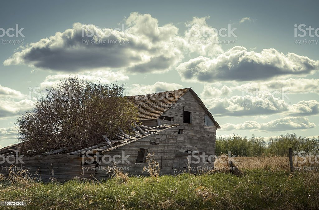 Tree-growing house in the prairies royalty-free stock photo