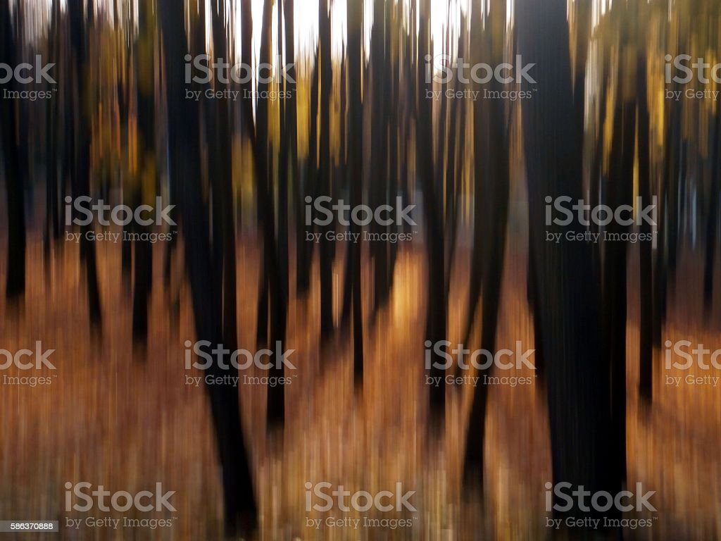 tree-impression stock photo