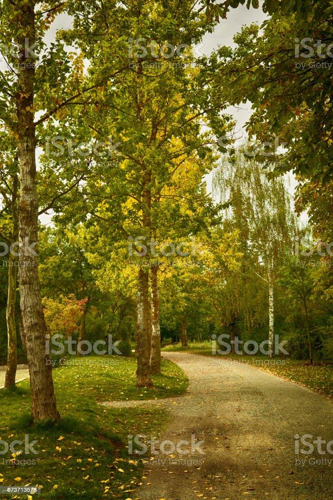 Avenue bordée d'arbres en automne photo libre de droits