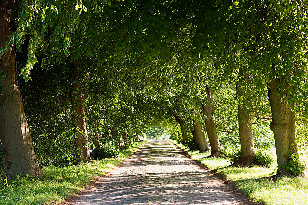 Treelined avenue, Rugen, Germany stock photo