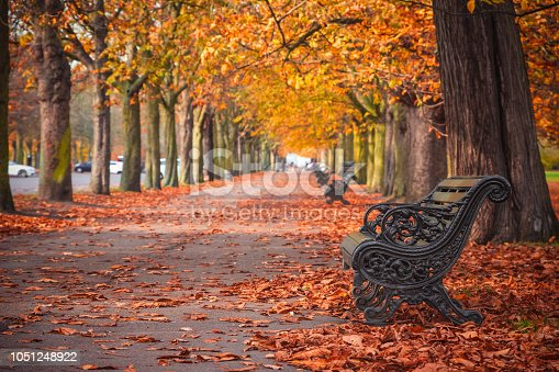 Seasonal landscape, treelined avenue with autumn scene in Greenwich, London