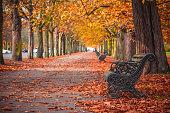 Seasonal landscape, treelined avenue with autumn scene in Greenwich, London