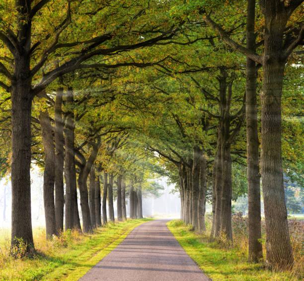 Bäumen gesäumt Landstraße zurück mit atmosphärischen Sonnenstrahlen im Morgennebel im Sonnenlicht beleuchtet. – Foto