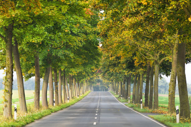 Treelined country road in autumn stock photo