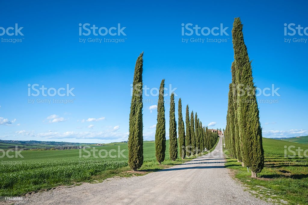 Treelined Country Road In Val D'Orcia royalty-free stock photo