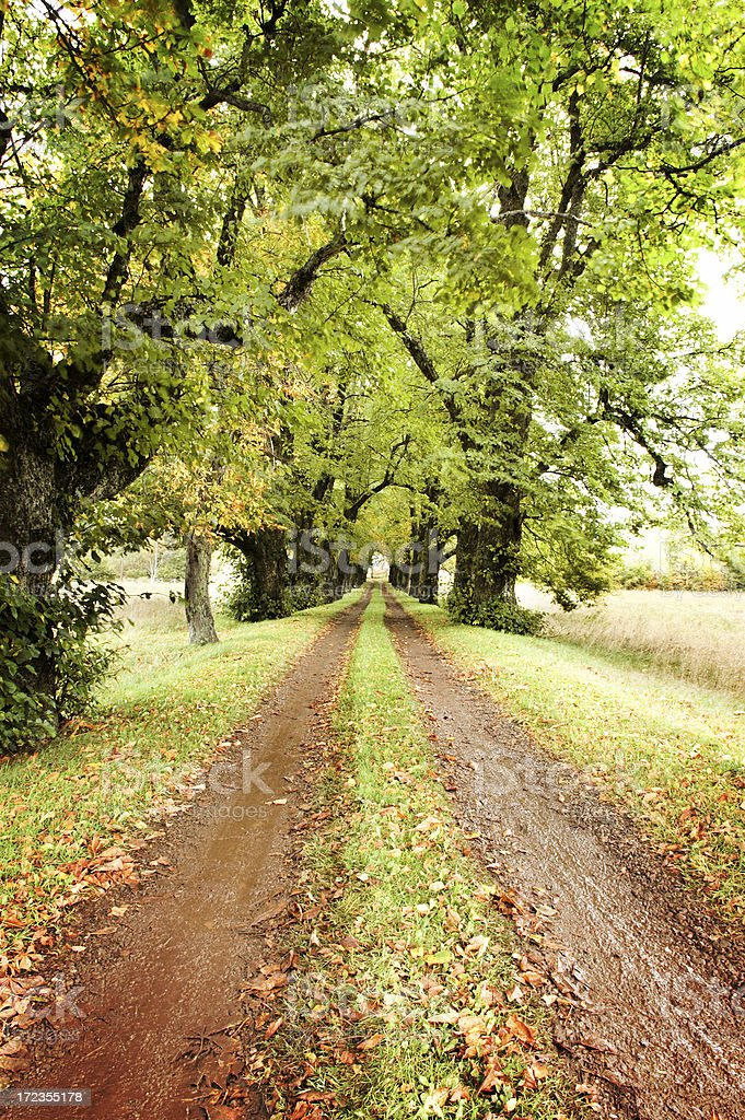 Tree-lined Driveway royalty-free stock photo