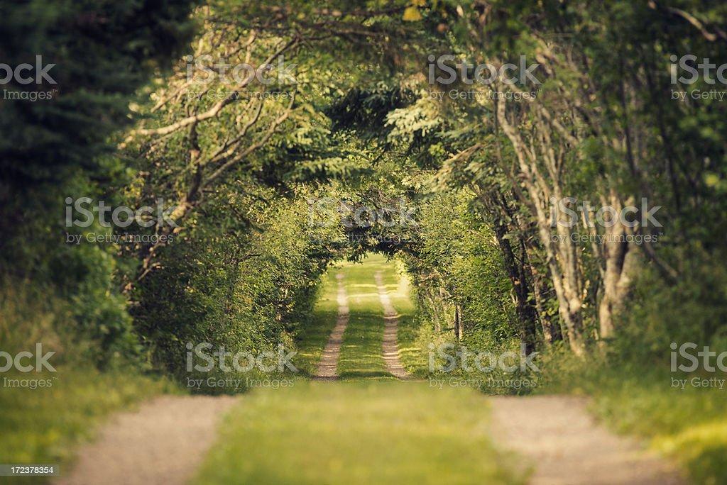 Treelined Driveway royalty-free stock photo