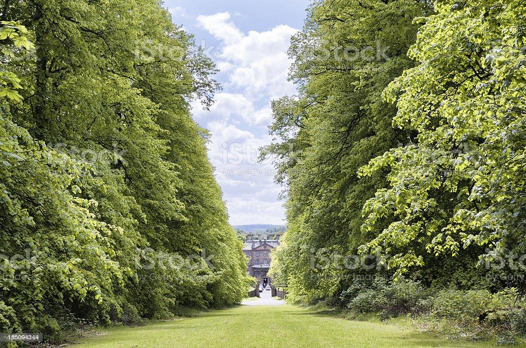 Tree-Lined Grassy Path stock photo