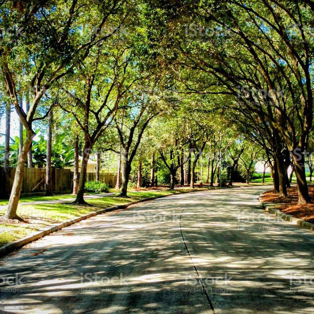 Treelined Park Center Drive stock photo