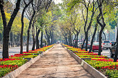 Stock photo of walkway and the treelined Paseo de la Reforma, a wide and long avenue in Mexico City, Mexico.