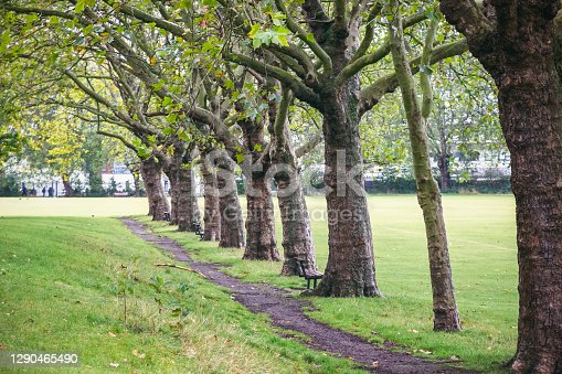 istock Treelined path at Downhills Park in the West Green area, London 1290465490