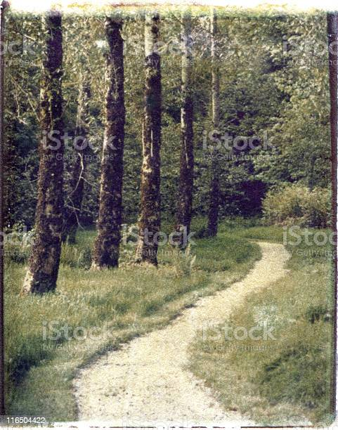 Photo of Tree-Lined Path