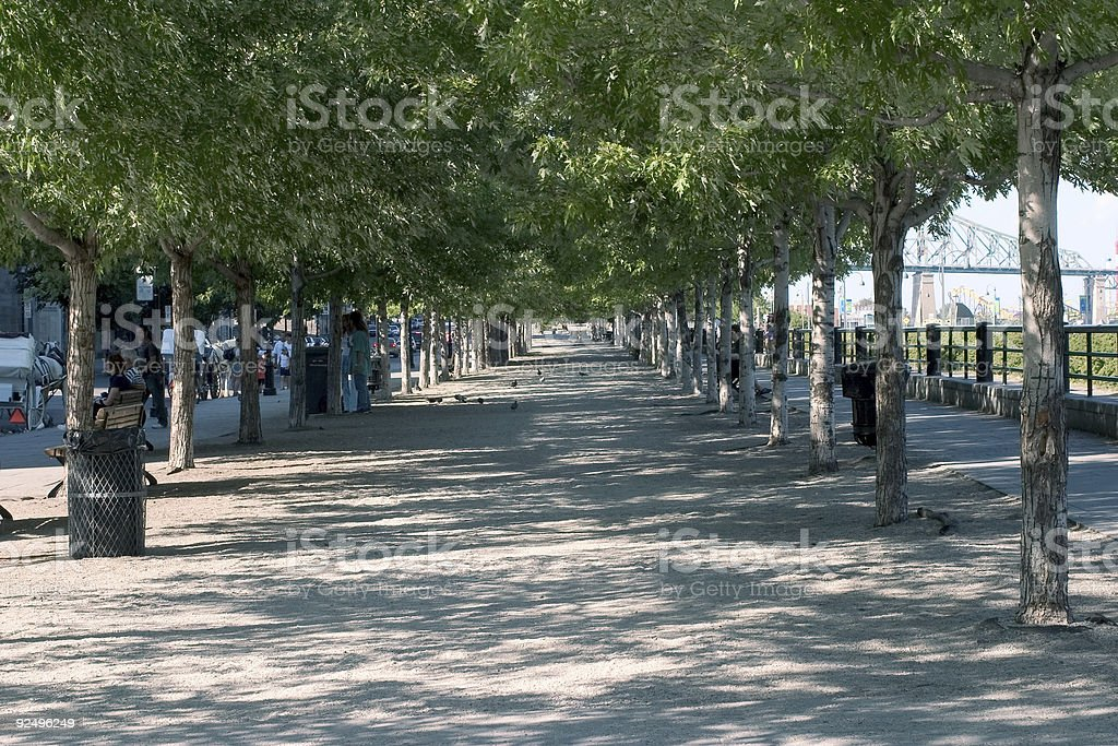 Tree-Lined Path royalty-free stock photo