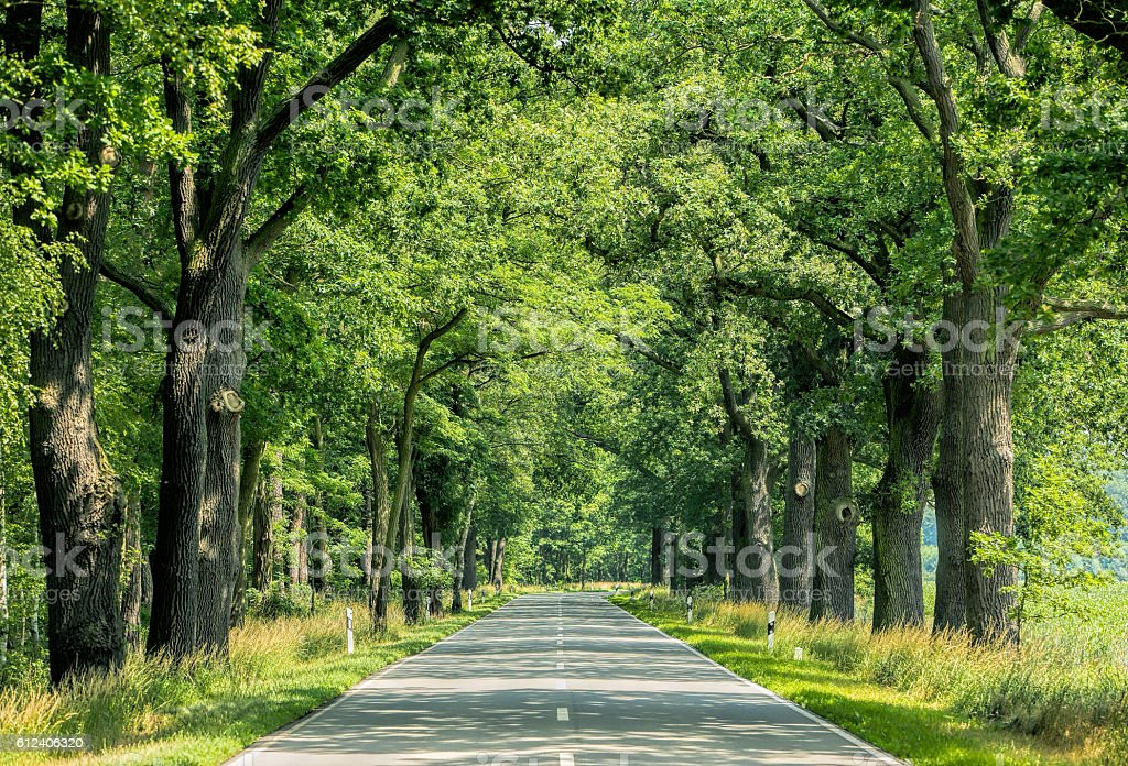 Treelined road countryside stock photo