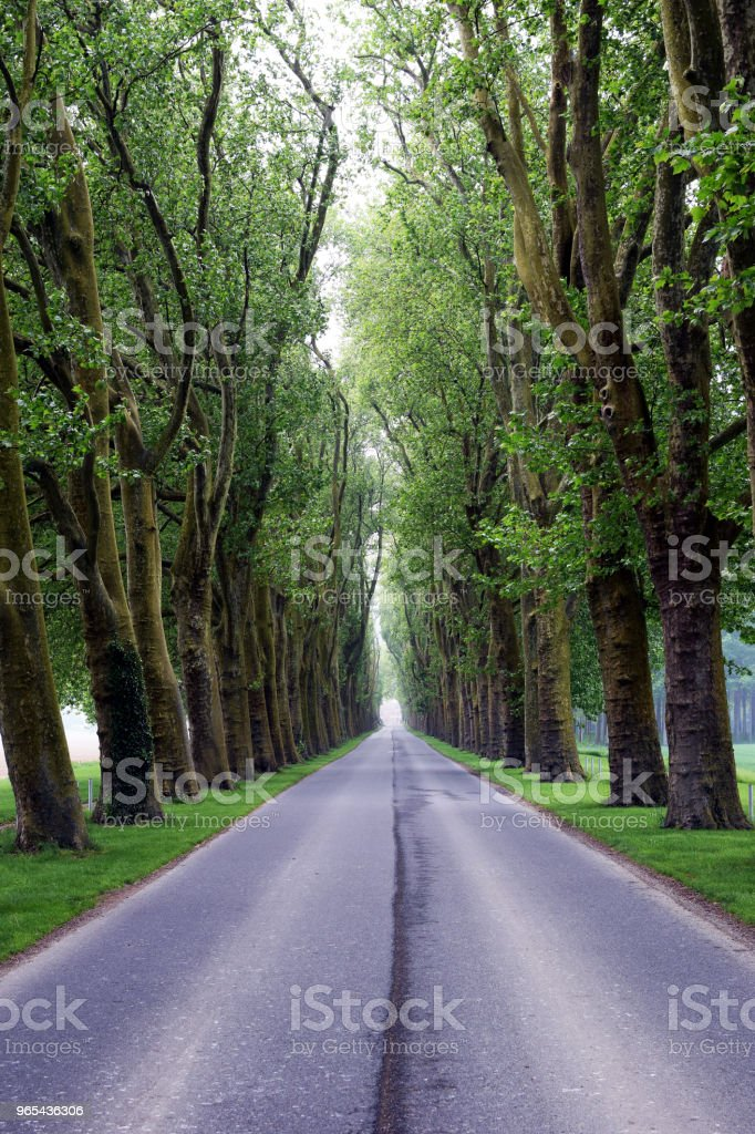 Tree-lined road zbiór zdjęć royalty-free