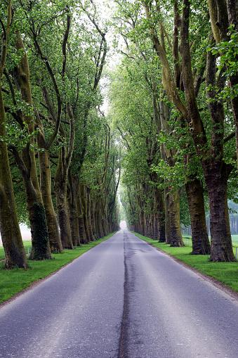 나무가 늘어선 Road 0명에 대한 스톡 사진 및 기타 이미지