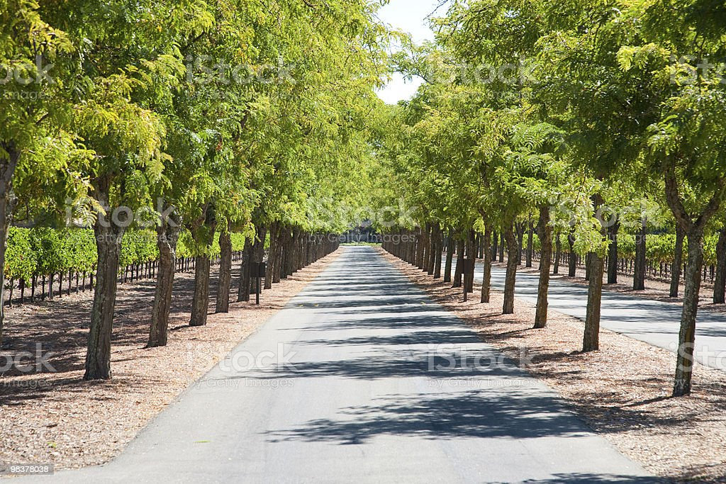 Tree-lined road royalty-free stock photo