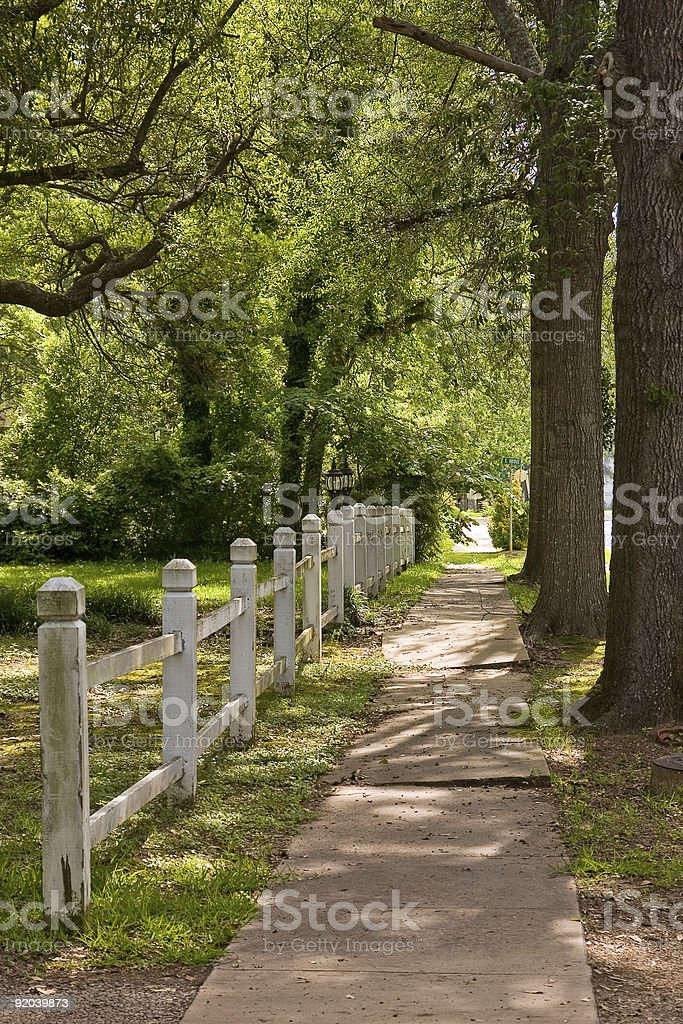 Tree-lined sidewalk royalty-free stock photo