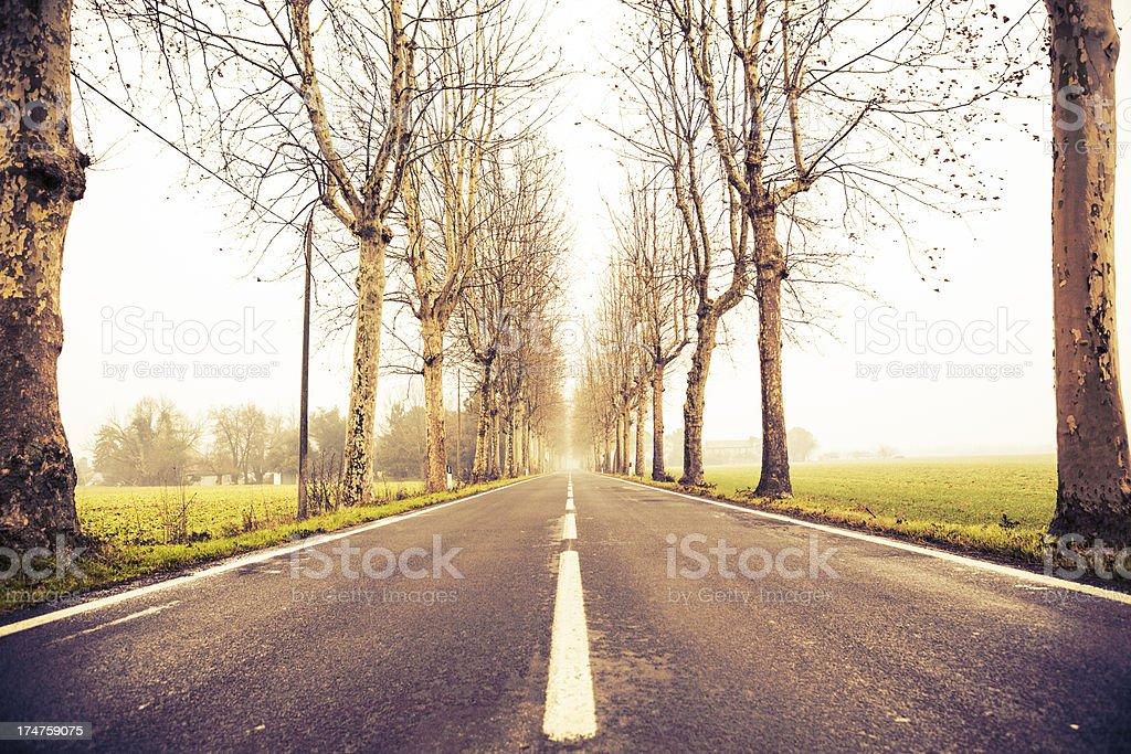 Treelined Street royalty-free stock photo