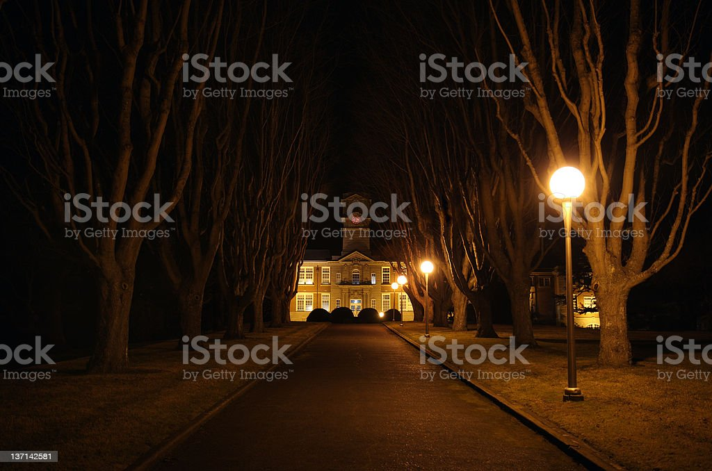 A series of streetlamps casts an eerie glow on a tree lined walkway...