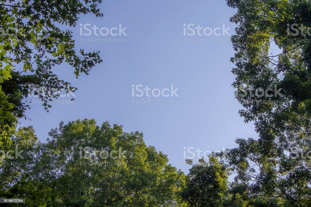Trees Above stock photo