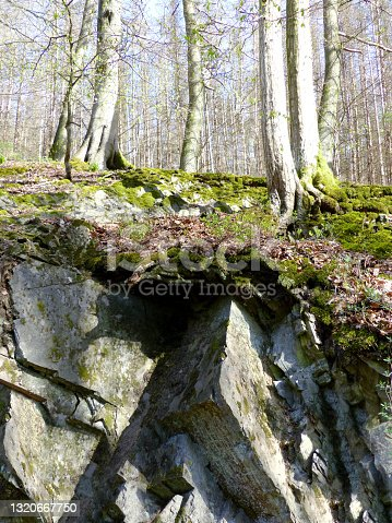 Forest-trees grown on a mossy ground above some uncommon cubic-looking rocks. The roots of the trees are hanging on the edge.