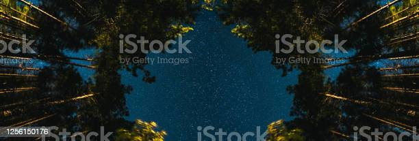 Photo of Trees against a starry sky at night