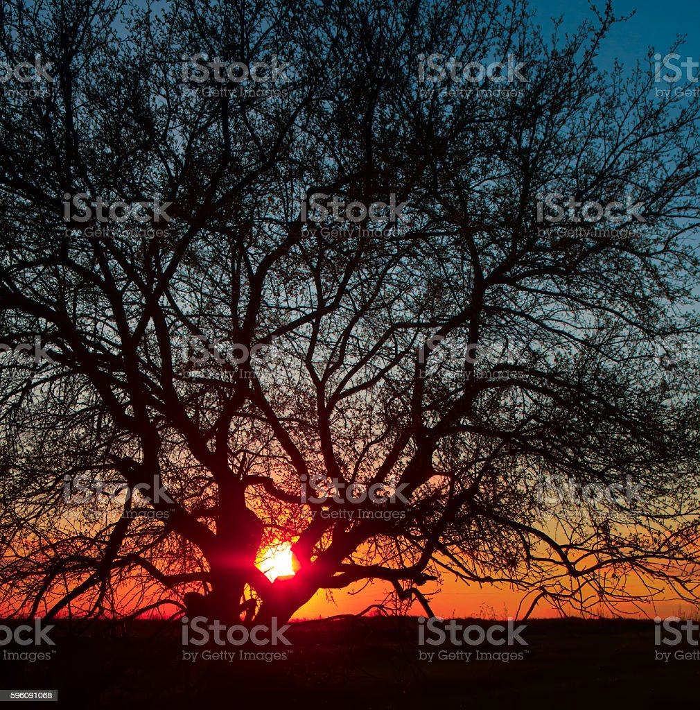 trees against beautiful sunset royalty-free stock photo