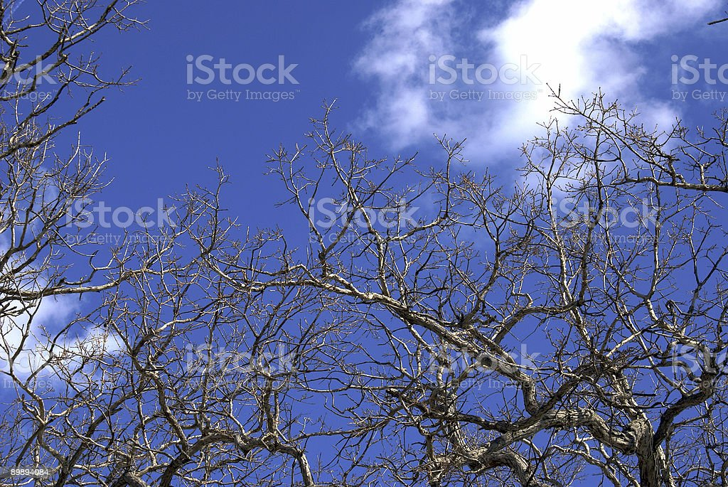 trees against blue sky royalty-free stock photo