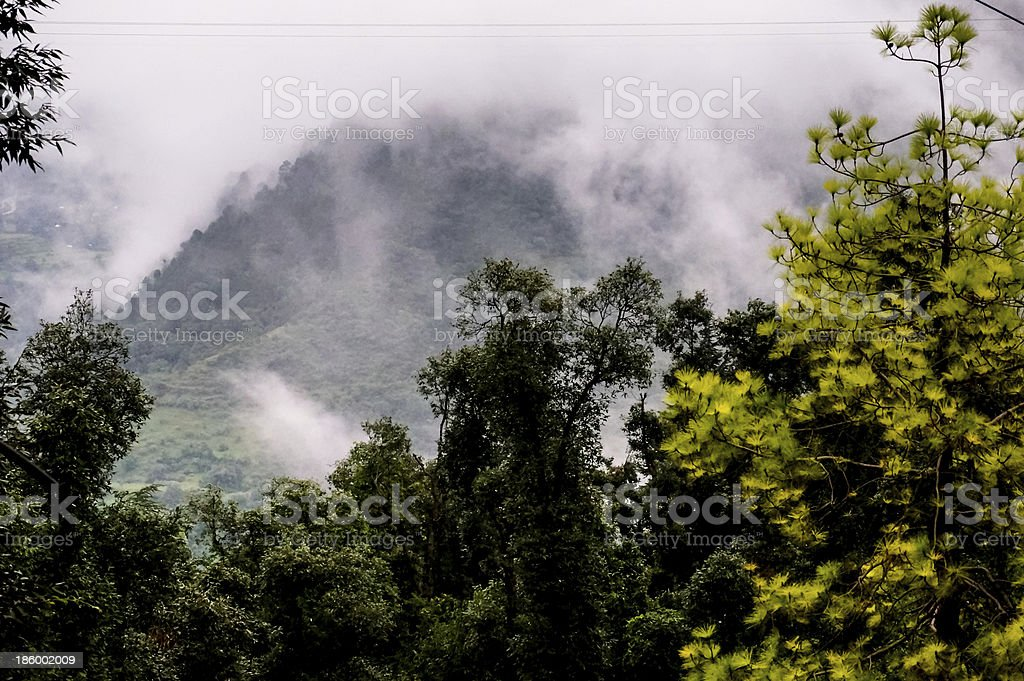 Trees against foggy hills royalty-free stock photo
