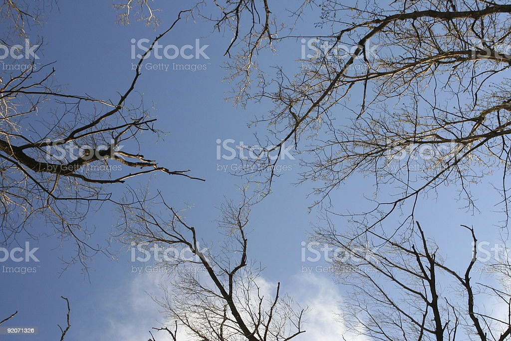 Trees against sky royalty-free stock photo