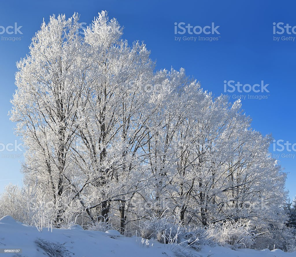 Trees against the blue sky royalty-free stock photo