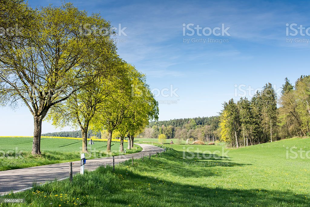 Trees along a country road royalty-free stock photo