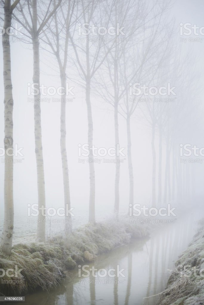 Trees along a ditch royalty-free stock photo
