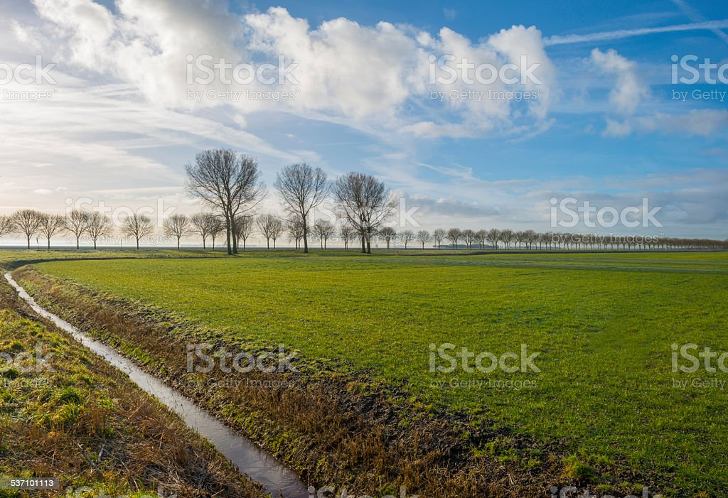 Trees along a meadow in winter stock photo