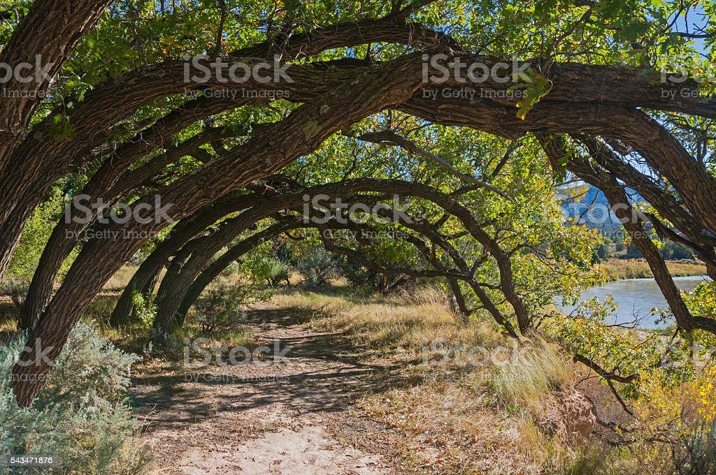 Trees Along The Rio Chama stock photo