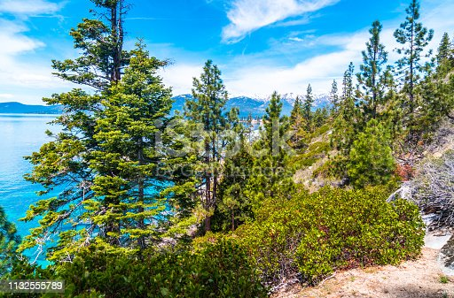 Trees along the water's edge of Lake Tahoe California on the Nevada Side