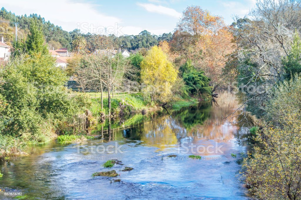 Trees along Umia river bank royalty-free stock photo