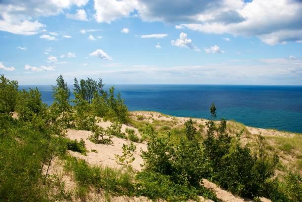 Trees Amongst Sand Dunes near Lake Michigan stock photo
