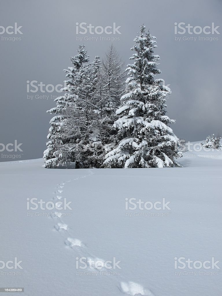 Trees and animal track royalty-free stock photo